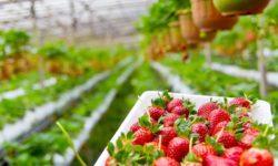 organické_potraviny_nie_sú_zárukou_toho_že_sú_aj_zdravšie