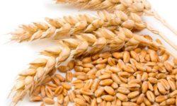 Celozrnné potraviny obsahujú vlákninu a sú vhodné v rámci žlčníkovej diéty.