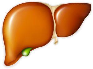 Pečeň je dôležitá žľaza a pre jej správne fungovanie je dôležité sa vhodne stravovať.