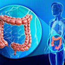 črevná mikroflóra, zdravé črevá