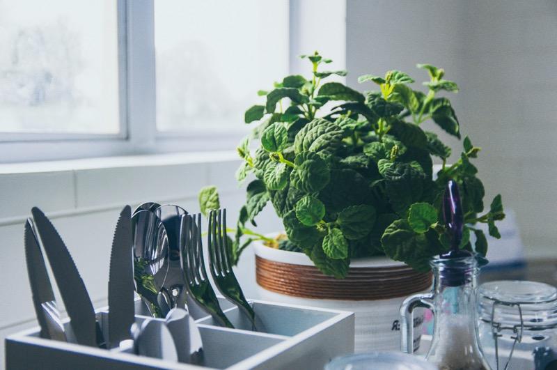 Mäta, zázvor, kurkuma a iné protizápalové bylinky sú skvelé dochucovadlá