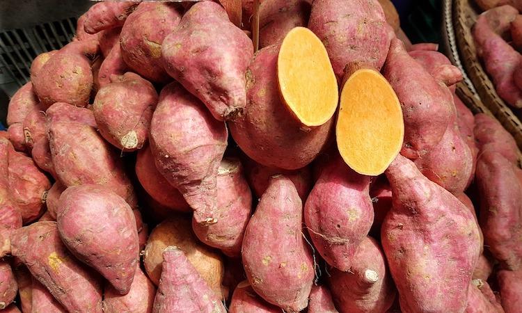 batata sladký zemiak