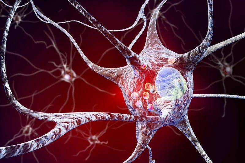 energia pre mozgovú činnosť