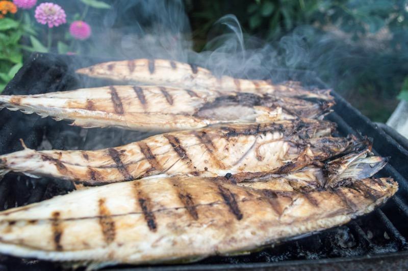 Tuky z rýb